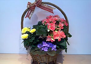 Basket with live flowers