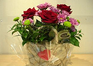 Arrangement of 3 red roses and chrisanthemums in a pot